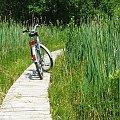 Ścieżka dydaktyczna Spławy #kładka #Spławy #rower