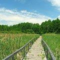 Kładka na Jeziorze Łukie #Łukie #kładka #jezioro