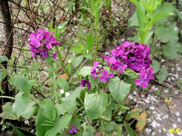 #kwiaty #ogród #roslina