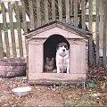 Jak pies z kotem ! #pies #kot #buda #kundel