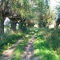 Jedziemy do Marianowa #droga #wierzba #wierzby