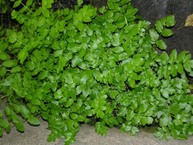 Roślinka 1