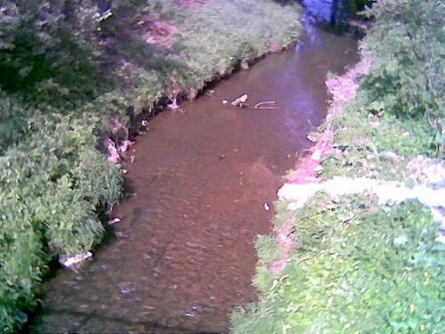 Kurówka - widok z mostu na ul. Warszawskiej #Kurów