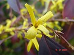 http://images2.fotosik.pl/210/621ed19d6d1e2ac1m.jpg