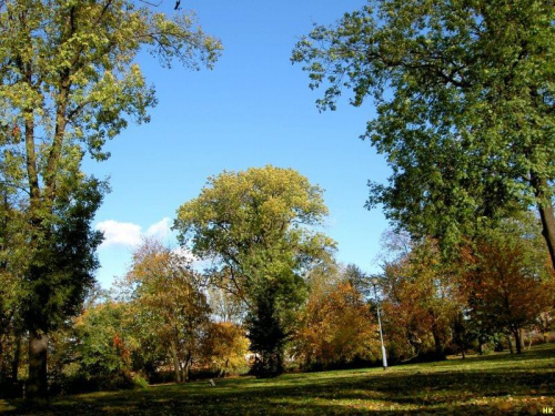 w parku miejskim nadal jesiennie po chwilowej zimie #jesień #park #Gdańsk #drzewa