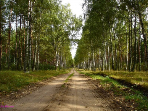 Droga Zdory - Kwik