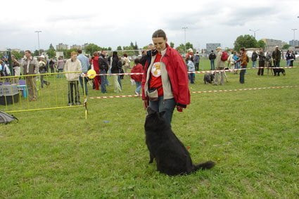 04.06.2006. Pokaz psich umiejetnosci podczas pikniku fundacji Mam marzenie na stadionie Lecha w Poznaniu