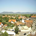bocki Bornheim #obserwacje #bornheim #gniazdo #bociany